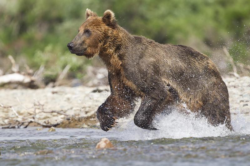 2013_07_24_Bears_0193