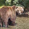 2013_07_24_Bears_0311