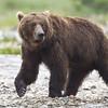 2013_07_24_Bears_0104