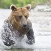 2013_07_24_Bears_0249
