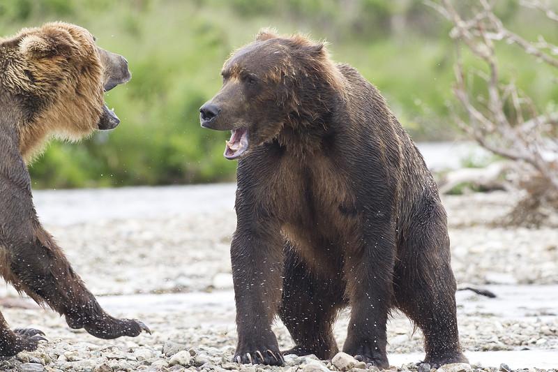 2013_07_24_Bears_0021