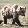 2013_07_24_Bears_0269