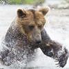 2013_07_24_Bears_0250