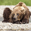 2013_07_24_Bears_0285