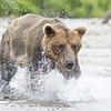 2013_07_24_Bears_0247