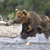 2013_07_24_Bears_0178