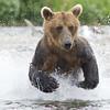 2013_07_24_Bears_0164