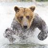 2013_07_24_Bears_0262
