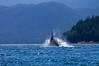 Whale breaching2