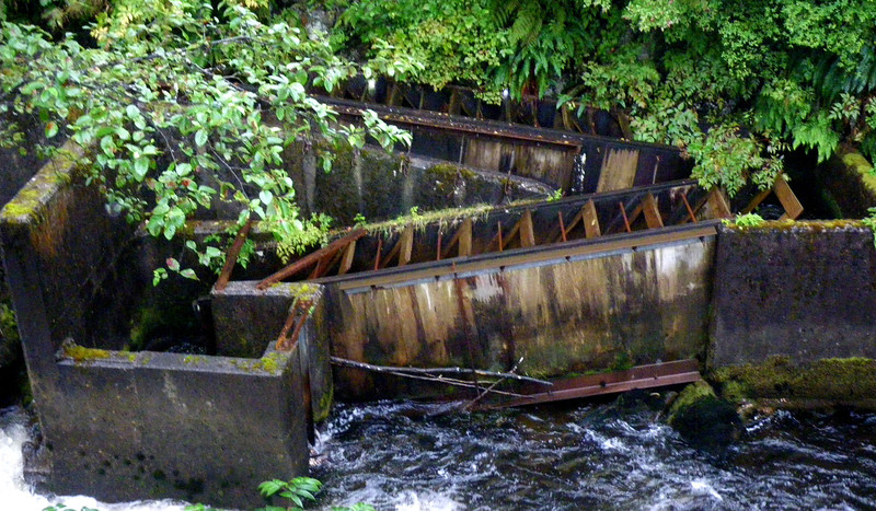 A fish ladder which is a series of pools arranged like steps to allow the salmon to travel upstream around a dam or falls