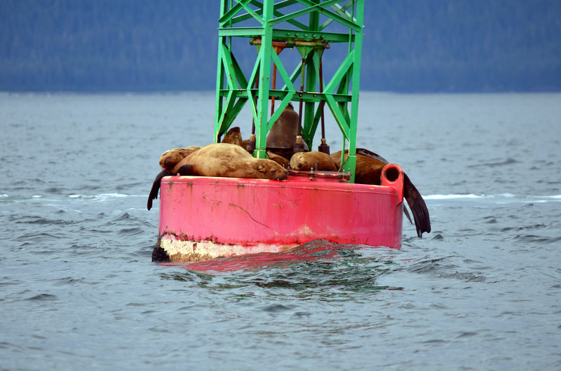 Sealions being lazy!