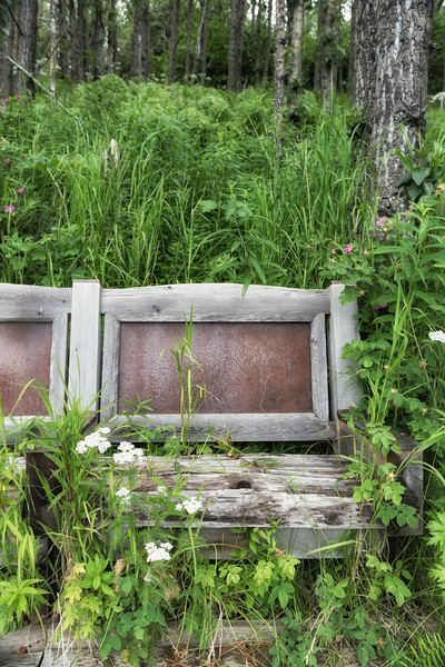 These overgrown benches found at end of a trail leading out from Wynn Nature Center in Homer, Alaska.