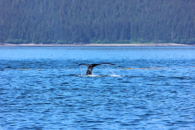 Icy Strait Point / June 16, 2014