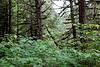 Alaska Rainforest Sanctuary