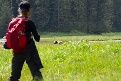 The second of seven bears near the Sea Lion Cove Trail, Kruzof Island, near Sitka, AK.