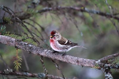 little birdie at Nan's