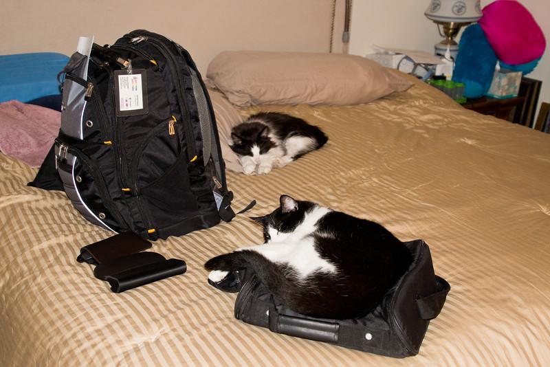 Kitties on Jeff's Bags
