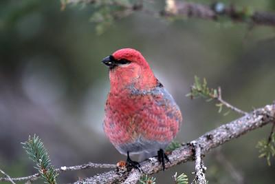 birdie at Nan's
