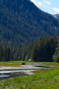 Brown bear near Sea Lion Cove Trail.