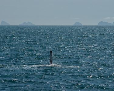 DSC_1210 flipper wave
