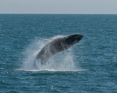DSC_1218 whale breech