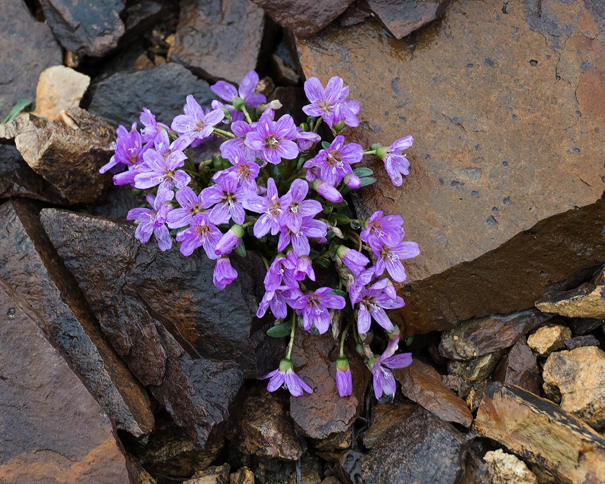 DSC_0395 polychrome flowers