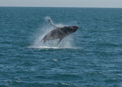 DSC_1219 whale breech