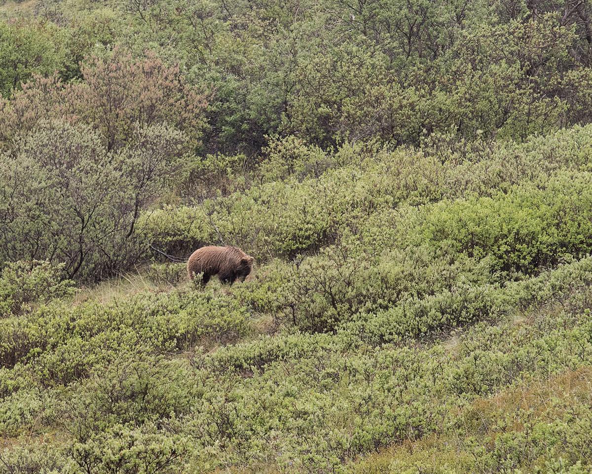 DSC_0410 grizzly