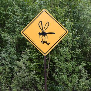 DSC_0354 mosquito