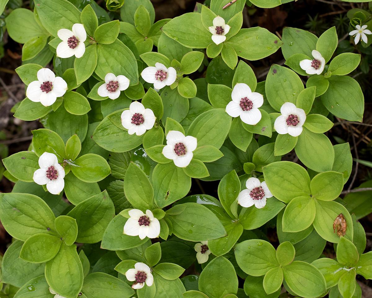 DSC_0346 flower group