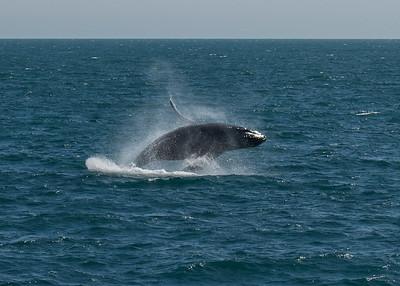DSC_1220 whale breech