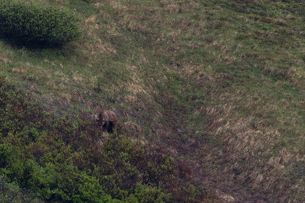 DSC_0543 grizzly