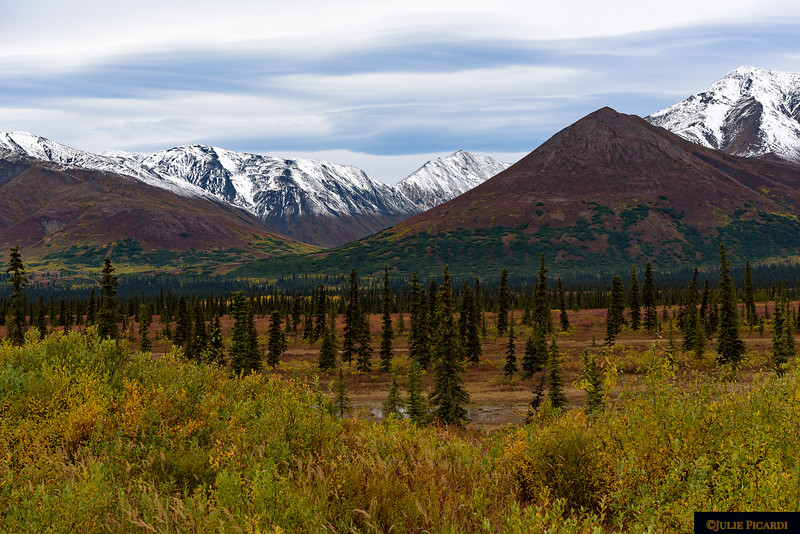 Fall colors of Denali