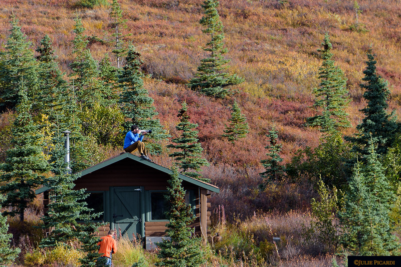 A perfect spot to capture the bull moose.