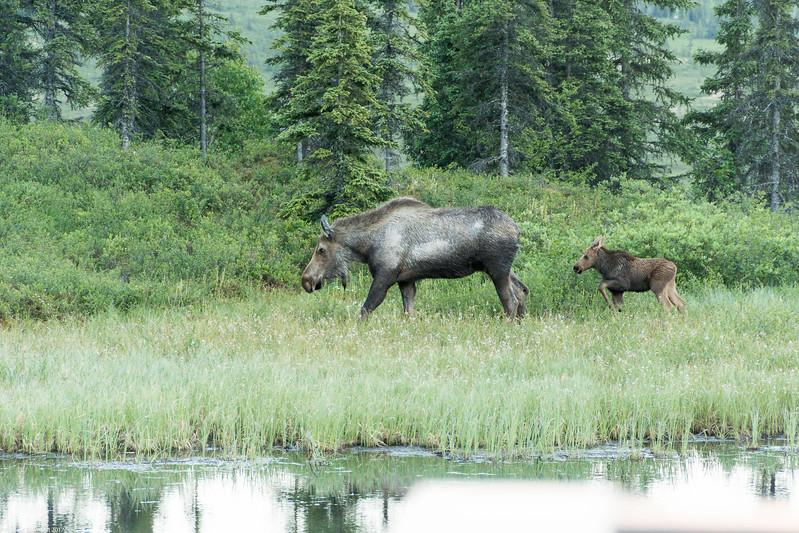 Alaska 2017 Images-332