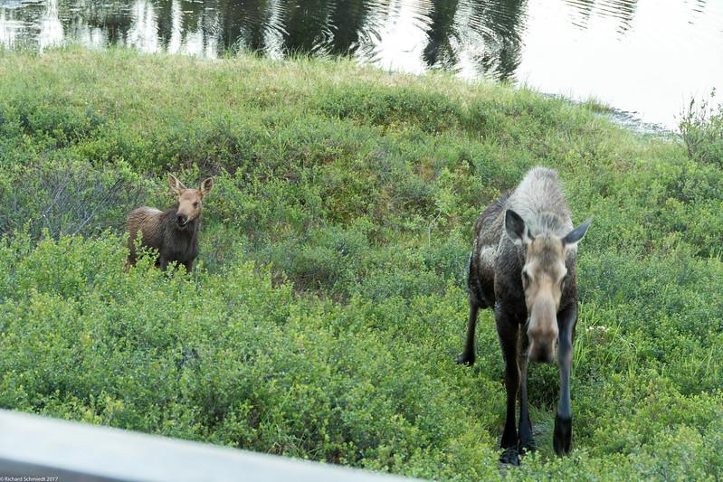 Alaska 2017 Images-337