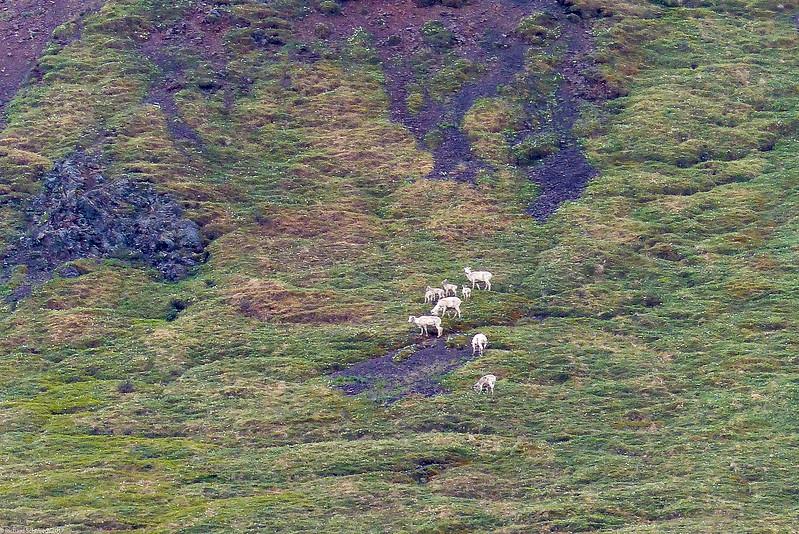 Alaska 2017 Images-253
