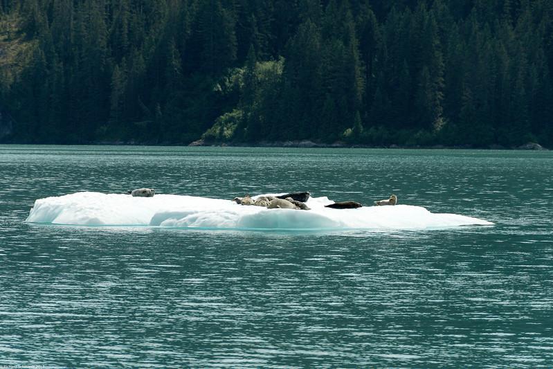 Alaska 2017 Images-226