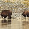 Alaska 2017 Images-194