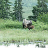 Alaska 2017 Images-331