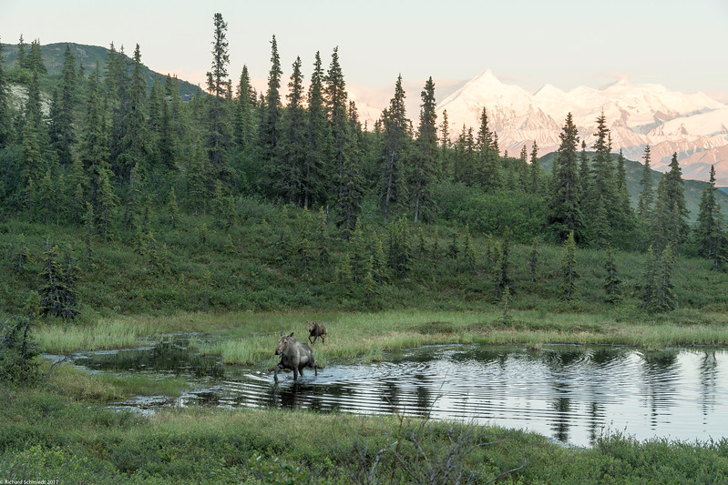 Alaska 2017 Images-335