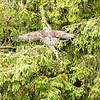 Alaska 2017 Images-199