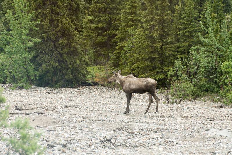 Alaska 2017 Images-251
