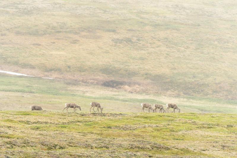 Alaska 2017 Images-261