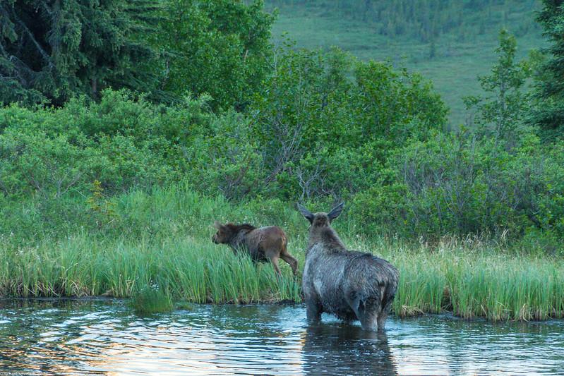 Alaska 2017 Images-329