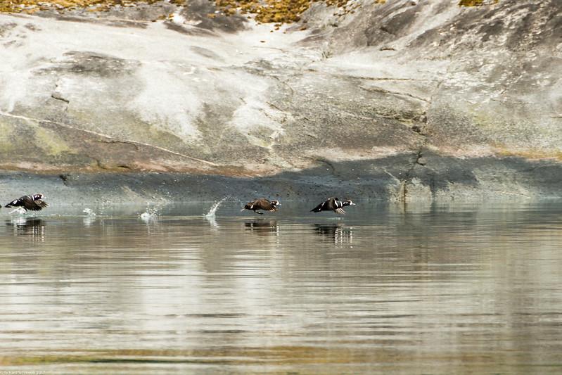 Alaska 2017 Images-227