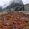 Orange lichen slick when wet