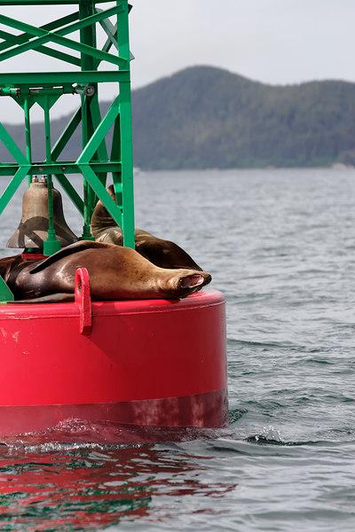 Juneau Seals