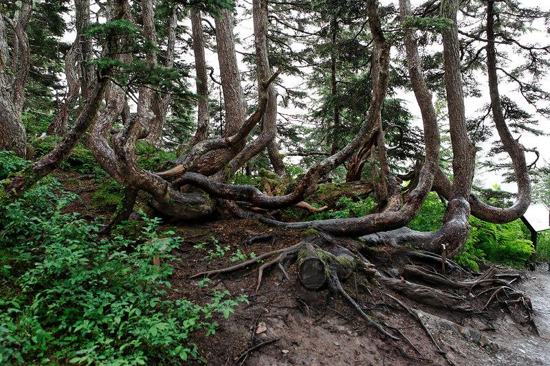 Juneau Mt Roberts