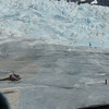 Coming into land on the glacier